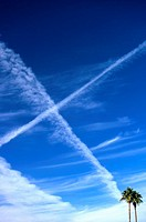 USA, Arizona, Phoenix, palm trees and jet contrails
