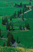Road-and, Cypresses, Monticchiello, Tuscany, Italy
