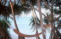 Idyllic View of Hammock Amongst Palm Trees  Zanzibar, Tanzania, East Africa