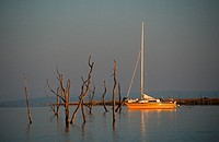 Dead Trees and Yacht  Lake Kariba, Zimbabwe