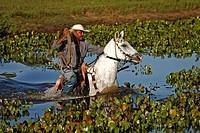 Pantanal Cowboy,Pantaneiro,Horse,Pantaneiro Horse,Pantanal,Brazil,riding,crossing water