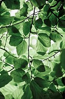 Leaves against sky