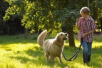 Boy walking golden retriever