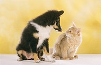 young dog and young cat