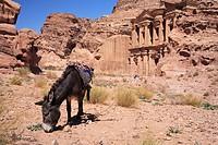 Al Deir, Monastery, Petra, Jordan, animal, Middle East, Oriental, ancient, Old, Petra, Stone, Nabbatea, Nabbatean, red