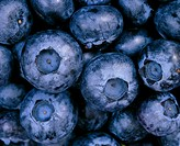 Blueberries Vaccinium sp   Blueberries contain phytochemicals called anthocyanidins, which protect the body against damage by free radicals, helping t...