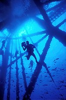 Scuba divers filming at an oil rig off the coast of Louisiana, USA  The three thousand oil rigs near the Louisiana coast form artificial reefs that su...