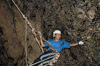 Swiftlet nest harvesting  Man on an aerial walkway collecting swiftlet nests from a cave wall  The nests of certain species of swiftlet are considered...