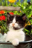 kitten in bucket