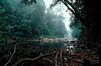 river in rainforest, Malaysia, Taman Negara National Park