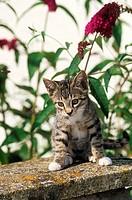 kitten in front of orange eye butterflybush
