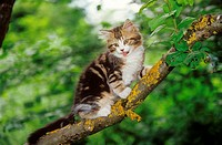 kitten on branch restrictions: Tierratgeber-Bücher / animal guidebooks, puzzles worldwide, mobile phone content worldwide