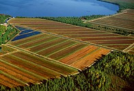 Agriculture - Aerial, Cranberry Bog / Northern Wisconsin, USA