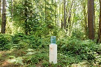 Water cooler in woods