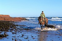 Harvesting Irish Moss on Cavendish Beach, Prince Edward Island National Park, Canada