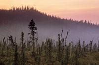 Ogilvie Mountains along Dempster Highway near Engineer creek, Yukon Territory, Canada