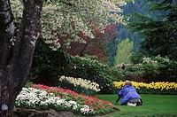 Butchart Gardens, woman photographs spring flower display, Victoria, Vancouver Island, British Columbia, Canada