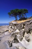 Cyprus trees on sandstone islet near Gabriola Island, British Columbia, Canada