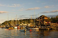 kayakers paddle in front of village, Cowichan Bay, Vancouver Island, British Columbia, Canada