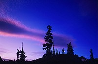 Silhouette of a Person at night, British Columbia, Canada