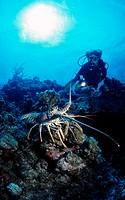 Caribbean Sea, Underwater diver