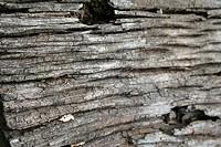 wooden texture, São Paulo, Brazil