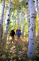 Couple Hiking in Aspen Grove