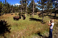 Tourist Photographing Bison, Yellowstone National Park