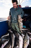 Cod Fishing, Northern Peninsula, Newfoundland