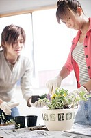 Young people potting plants