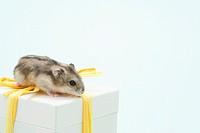 Dzhungarian hamster Phodopus sungorus atop present with bow, studio shot