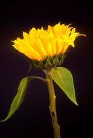 Flower, close-up