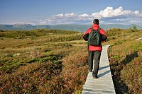 View of hiker on Lookout Trail and Gros Morne Mountain at left, Gros Morne NP, Newfoundland, Canada