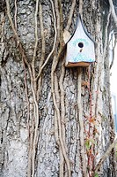 Bird house on a tree, Jacksonville, Florida