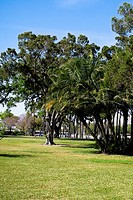 Trees in a park, Plant park, University of Tampa, Tampa, Florida, USA