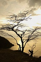 Silhouette of a tree at sunset, Taganga Bay, Departamento De Magdalena, Colombia