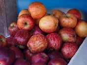 Close-up of a heap of apples in a fruit carton, Providencia, Providencia y Santa Catalina, San Andres y Providencia Department, Colombia