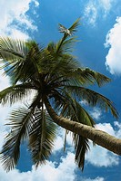 Low angle view of a palm tree, Providencia y Santa Catalina, San Andres y Providencia Department, Colombia