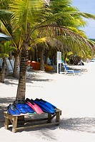 Flippers on a bench under a palm tree on the beach, West Bay Beach, Roatan, Bay Islands, Honduras