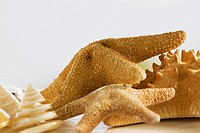 Close-up of star fish