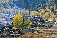 Pile of hay on wooden structures, Baihaba Village, Habahe County, Xinjiang Uygur Autonomous Region of People's Republic of China