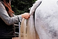 Young woman preparing the horse tail for the show