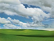 Clouds and blue sky over spring wheat fields, Palouse Hills, Washington State, USA