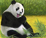 An illustration of a giant panda bear