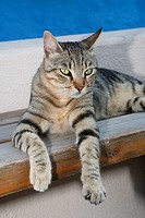 Cat, striped, bank, lie, outside, animal, pet, house-cat, free-living, mammal, tiger-cat, Freigänger, lazes about, resting, dozes, silence, serenity, ...