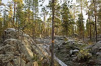 Sweden, Muddus National park, forest, trees, rocks, path, winter,