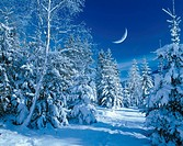 winter forest, moon-sickle, twilight, M, landscape, forest, conifers, broad-leafed trees, mixed forest, snow-covered, snow, snowed in cold, season win...