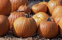 Close-up of pumpkins on hay