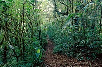 Trail in Monteverde cloud forest Preserve. Costa Rica