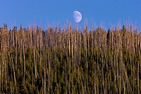 Moon rise over the hill in Yellowstone National Park, Wyoming, USA